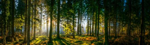 woods500