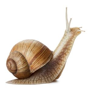 snail300