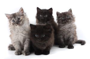 kittens300