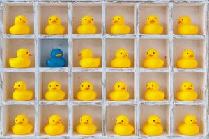 ducks300
